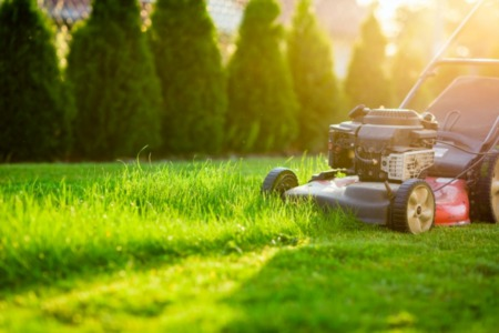 Curb Appeal : Lawn Care