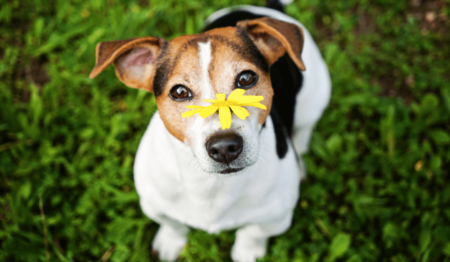 Pet-Friendly Gardening: Tips and Treats