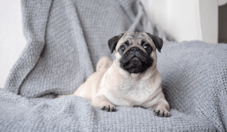 6 Tips for a Pet-Friendly Home