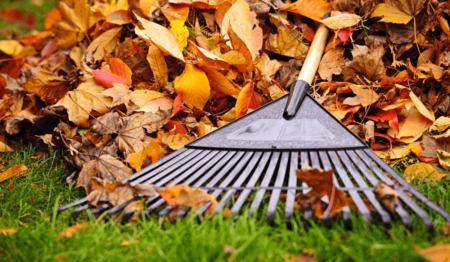 8 1/2 Essential Lawn Care Tips for the Fall
