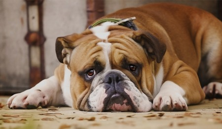 8 Tips For Relieving Doggy Boredom at Home