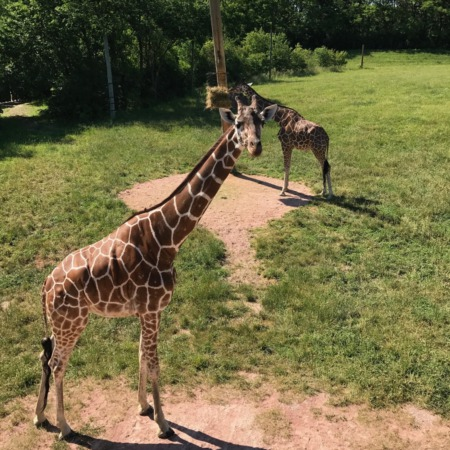 One-tank getaway: Fort Wayne Children's Zoo