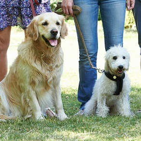 Teach your dog new tricks: Dog training in Indianapolis