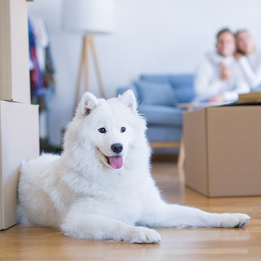 Tips to Make Your House Move Easier for Your Dog