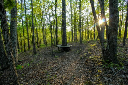 5 Amazing Places to Walk and Hike in Nashville