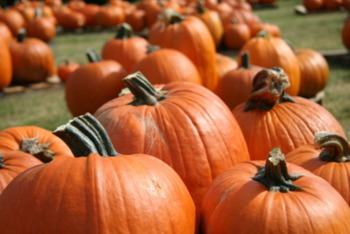10 Nashville Halloween Hot Spots