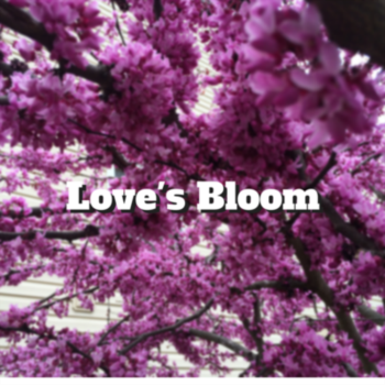 Love's Bloom
