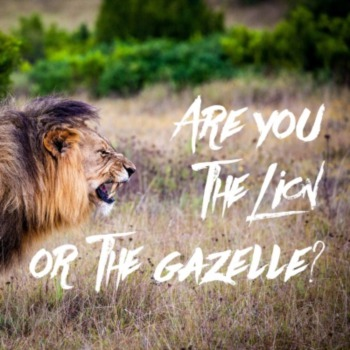 Are you the gazelle or lion this morning?