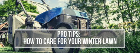 Pro Tips | How To Care For Your Winter Lawn