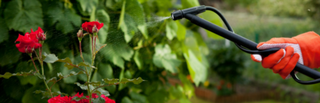 4 Simple Pesticides for Your Garden
