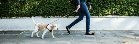 Is Your Neighborhood Pet Friendly? Here's How to Tell!