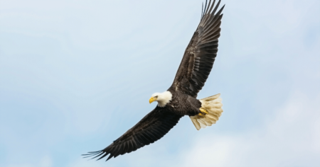 Soar Like an Eagle on Eagle Mountain Lake