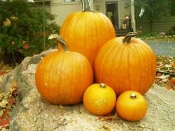 It's Pumpkin Season, Again In DC
