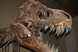 Expansion Coming to the Dinosaur Hall at the Natural History Museum