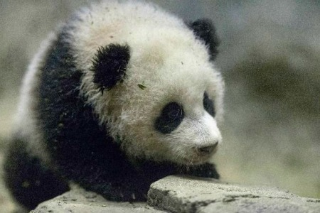 You Can Live With Bao Bao in Woodley Park