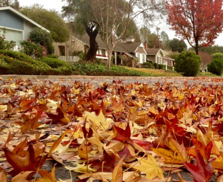 Autumn Market Brings Buyers Cooler Conditions