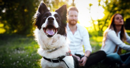 Pets Play A Role When Buyers Look For Homes