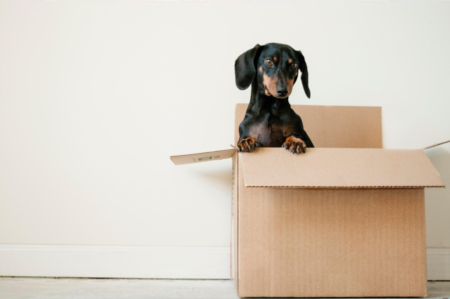 How to Save Money While Moving