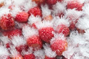 7 tips to prevent freezer burn