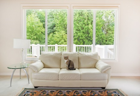 4 Essential Tips for Selling a Home with Pets