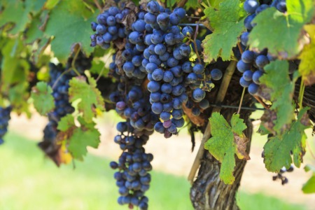 The Best Vineyards in Alexandria