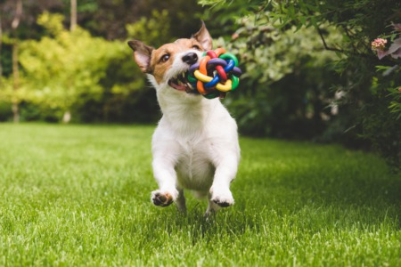 Tips For Home Buyers: Picking a Pet-Friendly Property