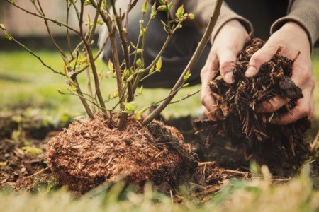 How to Avoid Planting Bad Trees Around Your Home