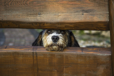 Top Tips for Dog Owners Transitioning to a New Home