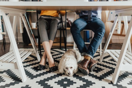 HOW TO PET PROOF YOUR RENTAL OR HOME