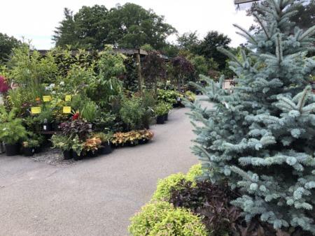 Gardening Tips Part 2