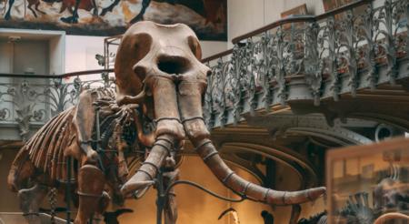 Prehistoric mammoth bone fragment found in Cape Coral