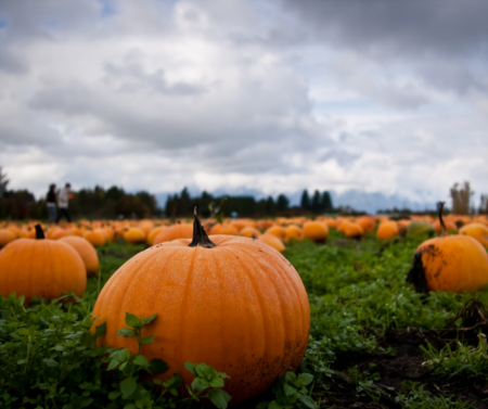 Magic & Memories at These 7 Fun, Family Friendly Pumpkin Patches!