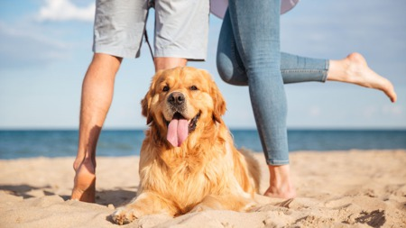 Top Pet-Friendly Things To Do Along The Grand Strand