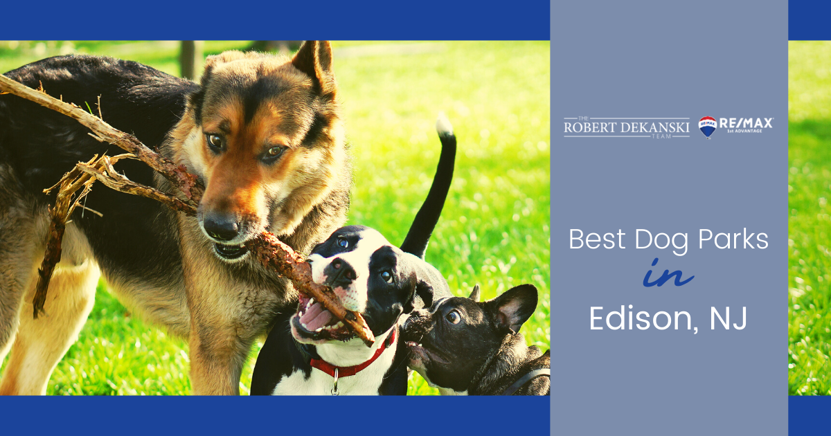 Best Dog Parks in Edison