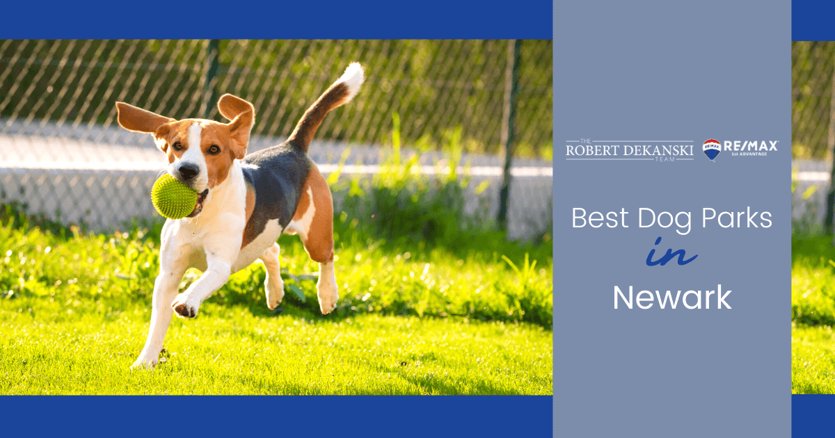Best Dog Parks in Newark