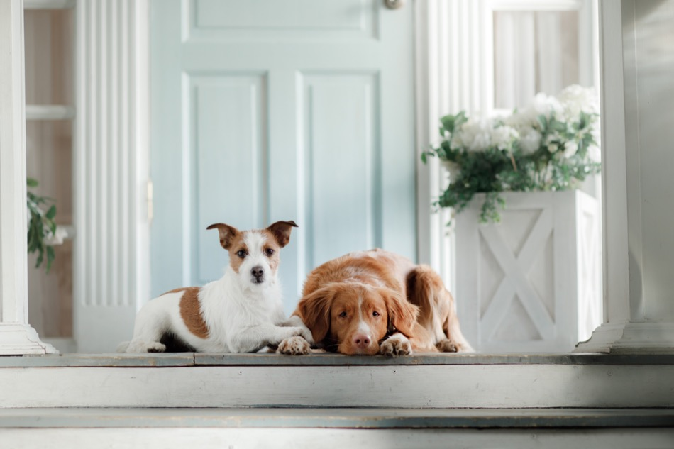 How to Maximize Resale Value for a Home with Pets