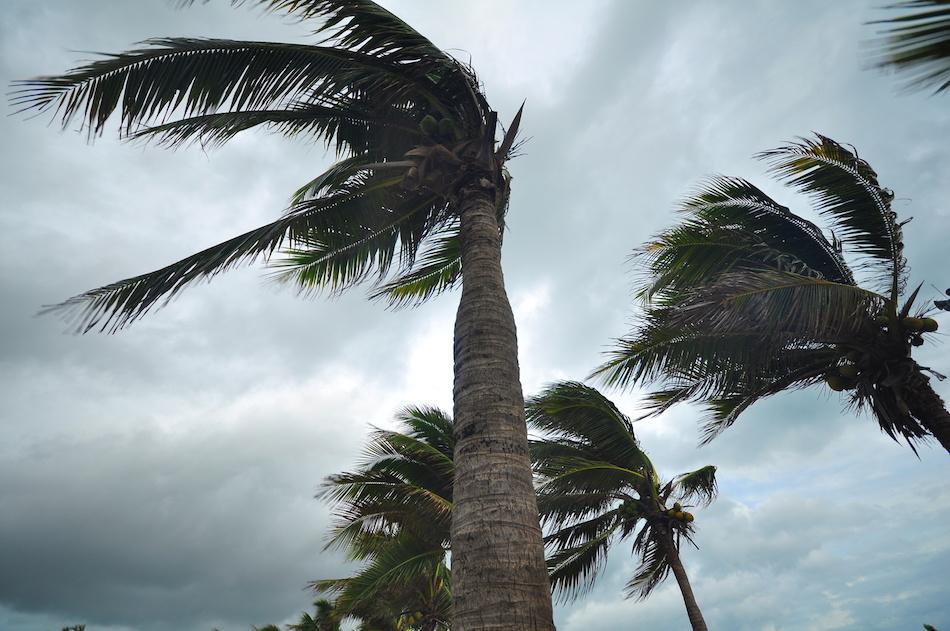 High Winds During Hurricane