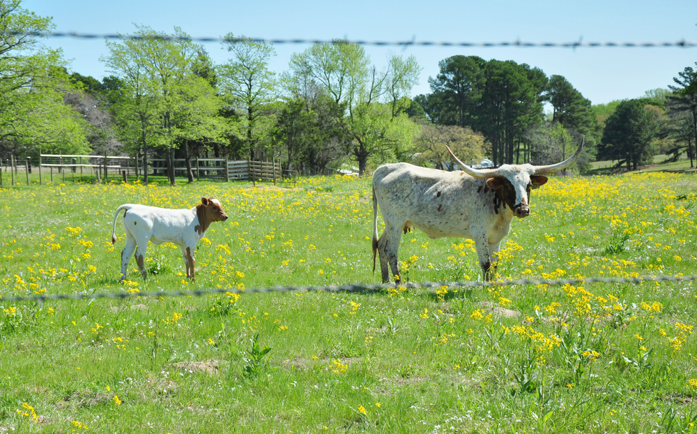 east texas ranches for sale