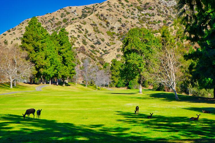 DeBell Golf Course Burbank