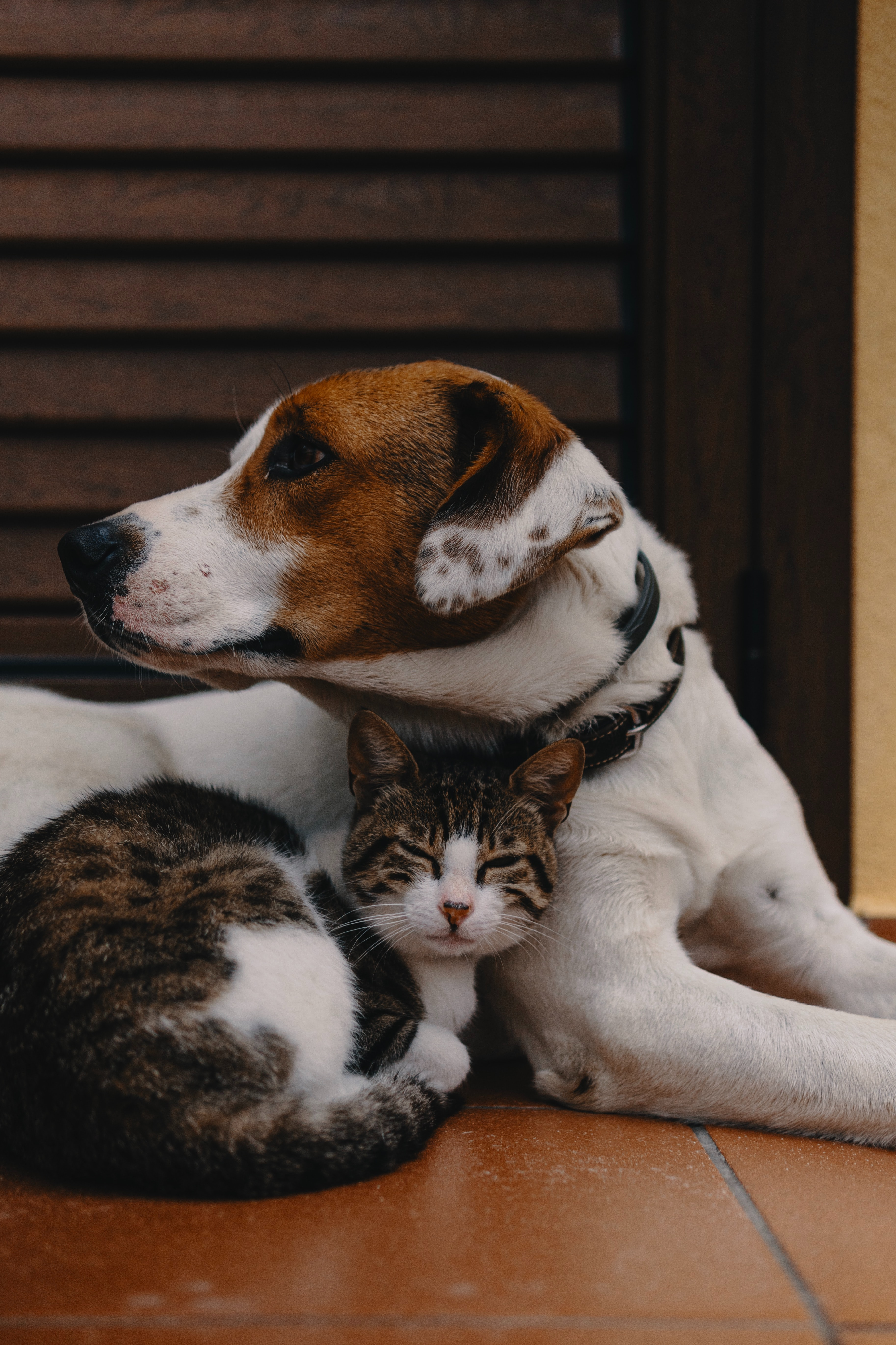 short coated white and brown puppy and kitten
