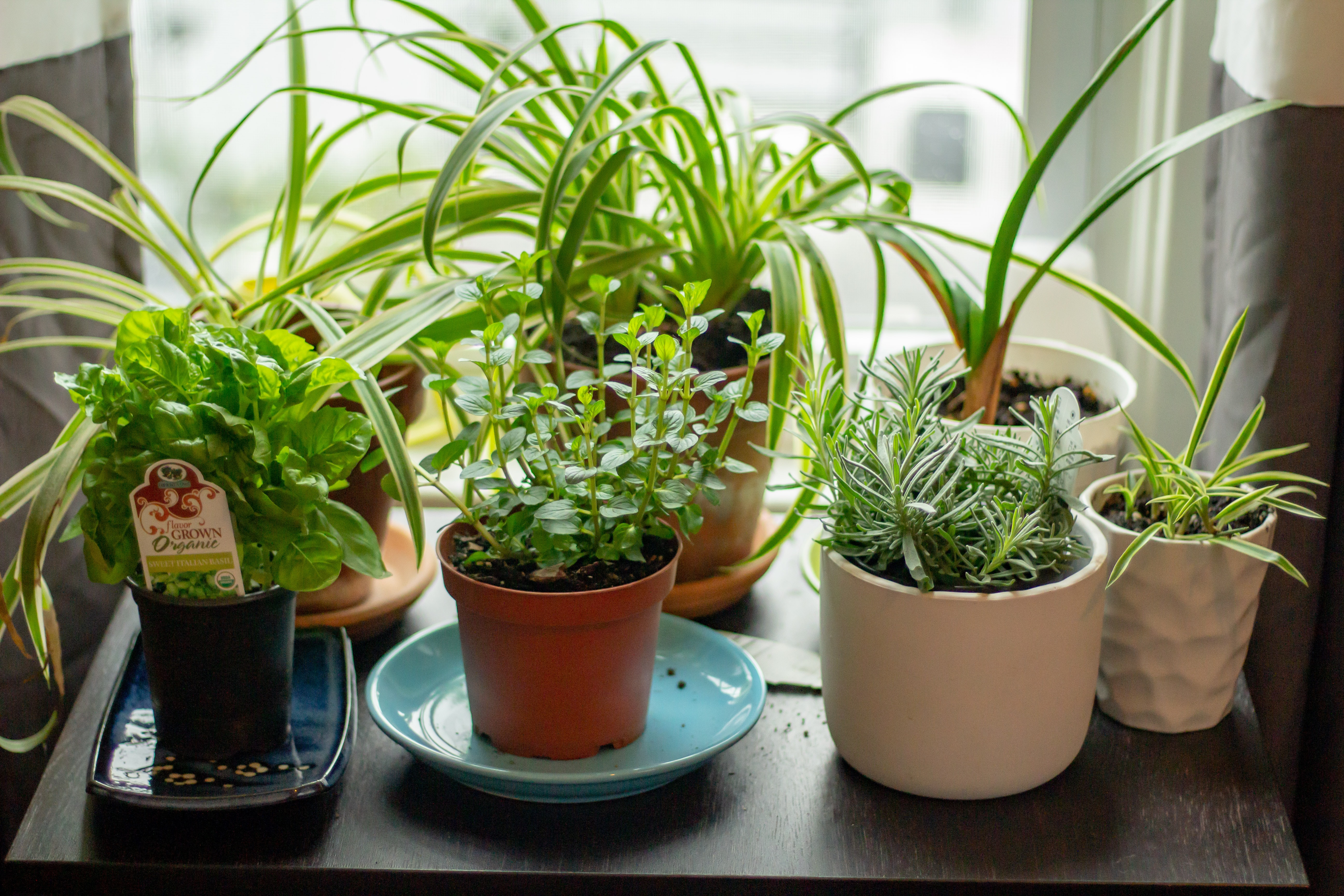 potted plants on a table in front of a window