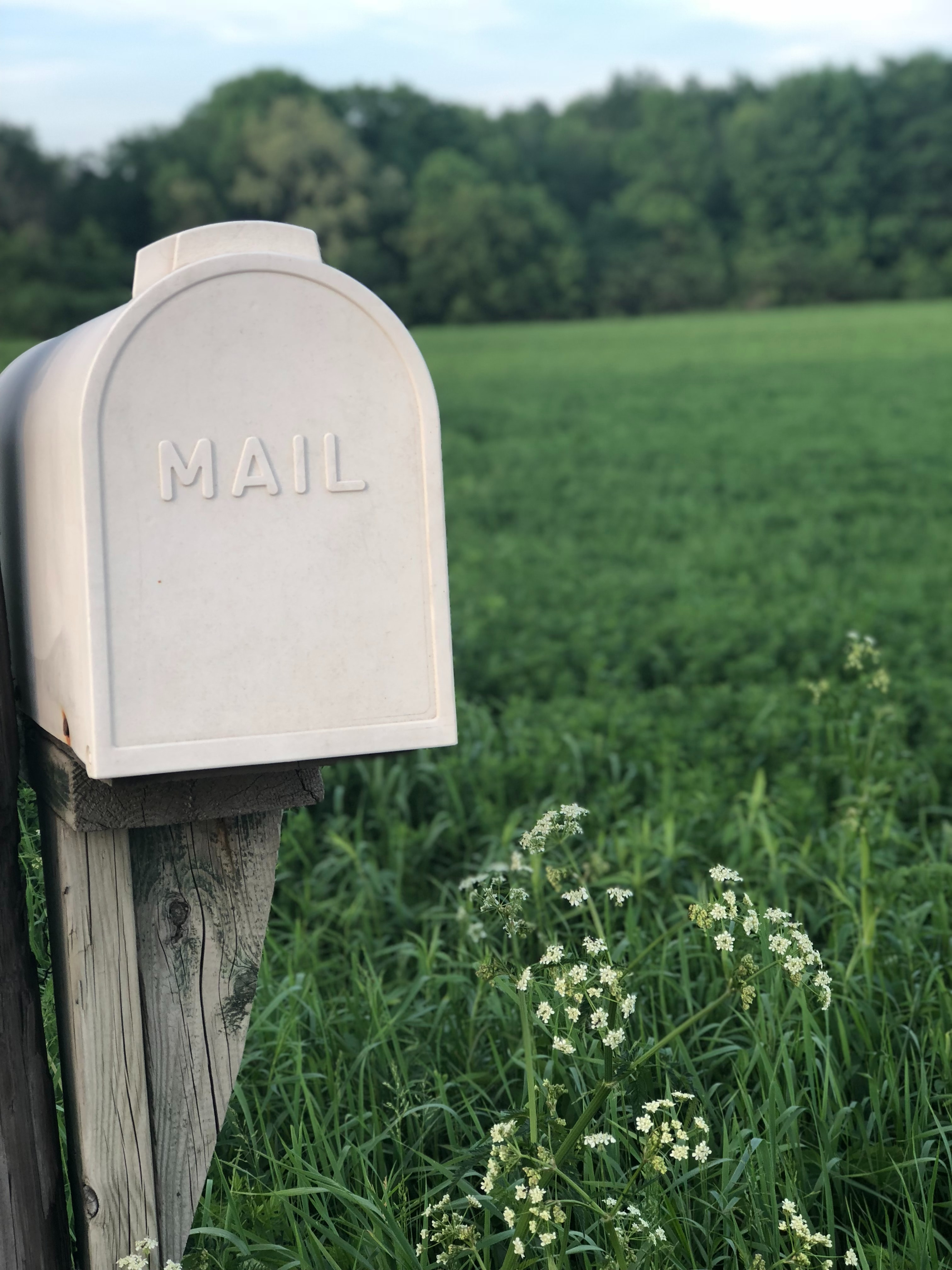 shallow focus of gray mailbox against a grassy background