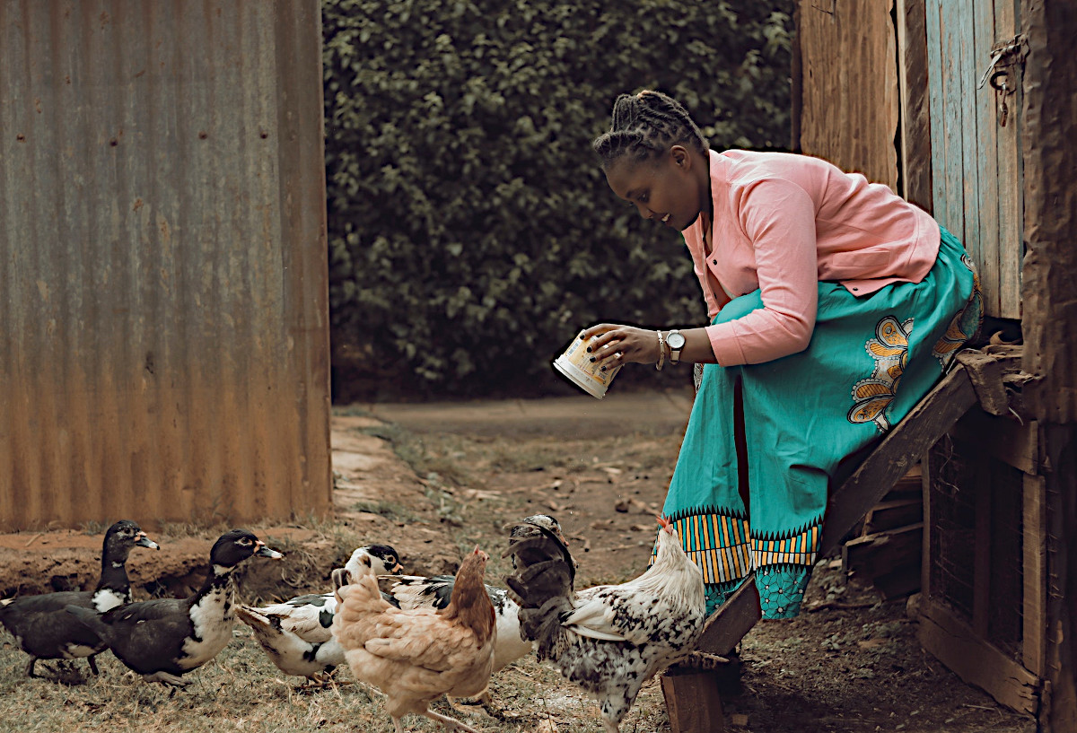 Backyard Chickens in Kitsap