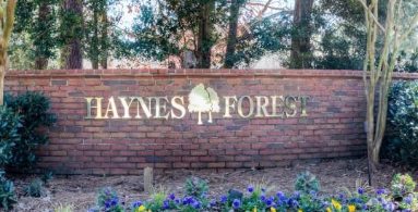 Haynes Forest
