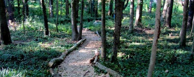 Kirkwood Urban Forest