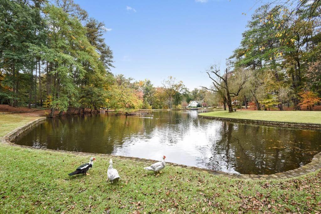 Adjacent duck pond
