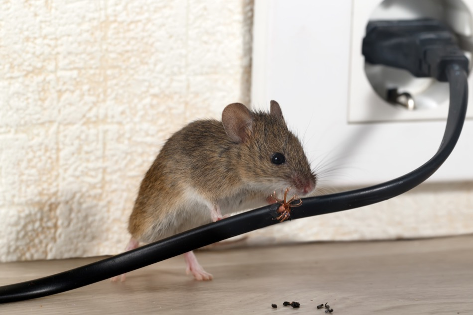 How to Keep Pests from Getting Into Your Home