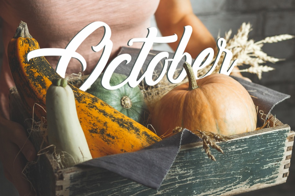 Boulder Is Fun in Fall! Here's What's Up In October