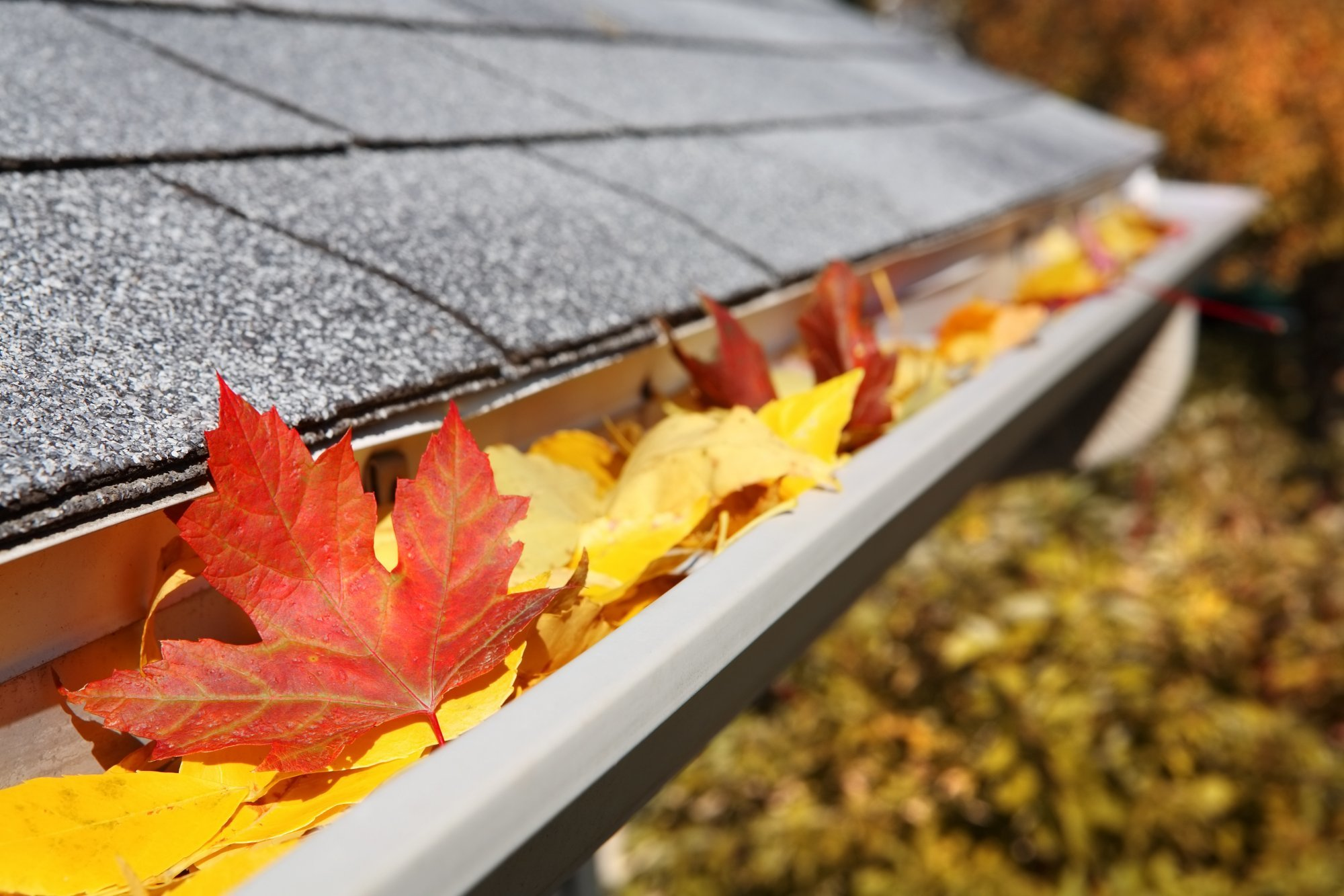 How to Prepare for Autumn Home Maintenance