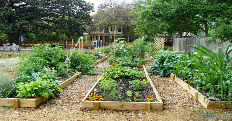 Charlotte NC Community Gardens